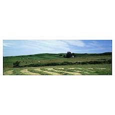 Lush rural landscape, Scotland Poster