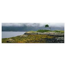 Tree on misty coast, autumn color, Scotland Poster