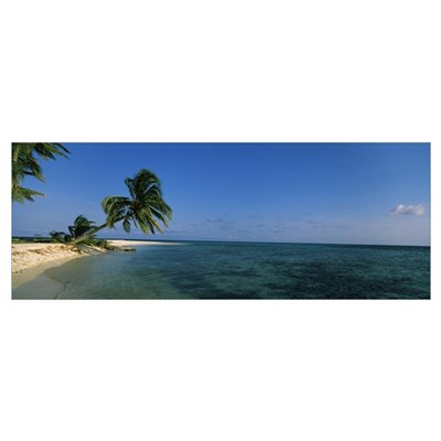 Palm tree overhanging on the beach, Laughing Bird Poster