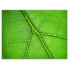 Green Leaf Macro Wall Art Poster