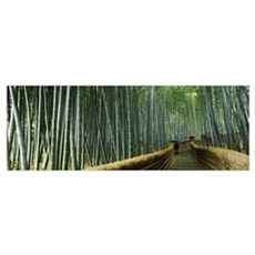 Stepped walkway passing through a bamboo forest, A Poster