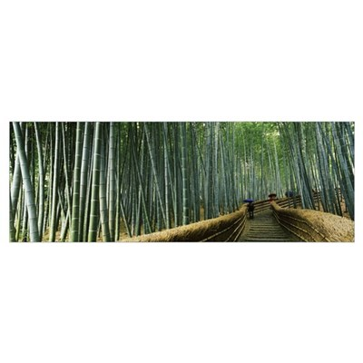 Stepped walkway passing through a bamboo forest, A Framed Print