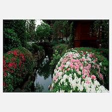 Flowers along a stream, Senso-ji Temple, Asakusa,
