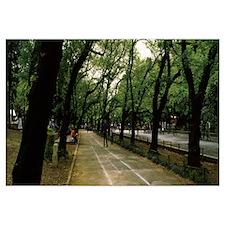 Trees along a road, Ueno Park, Taito, Tokyo Prefec