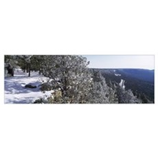 Trees covered with snow, Mogollon Rim, Tonto Natio Framed Print