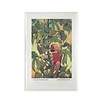 Smith's Jack & Beanstalk Rectangle Magnet (10 pack