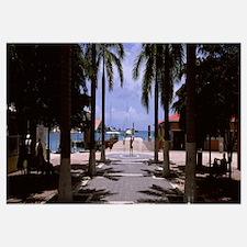 Palm trees on the beach, Philipsburg, Sint Maarten