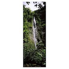 Waterfall in a forest, Waimoku Falls, Haleakala Na Poster