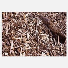 Close-up of a heap of driftwood, Crescent City, De