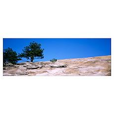 Trees on a mountain, Stone Mountain, Atlanta, Fult Poster