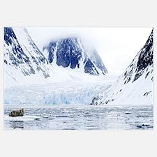 Bearded Seal resting on an ice flow, Spitzbergen,
