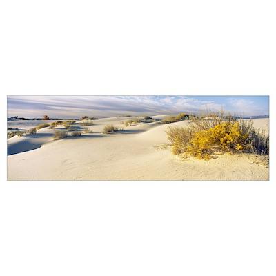 Desert plants in a desert White Sands National Mon Poster