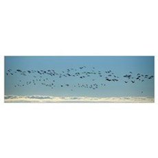 Flock of geese flying over the sea Iceland Canvas Art