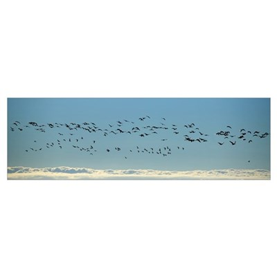 Flock of geese flying over the sea Iceland Poster