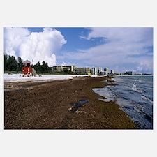 Red algae washed up on a beach Siesta Beach Siesta