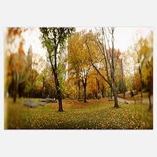 Trees in a park Central Park Manhattan New York Ci