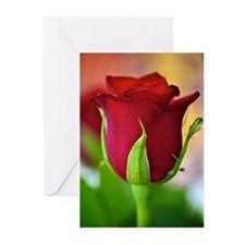 Red Rose Greeting Cards (Pk of 10)