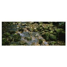Mineral Covered Rocks in Stream St Lucia Windward  Poster