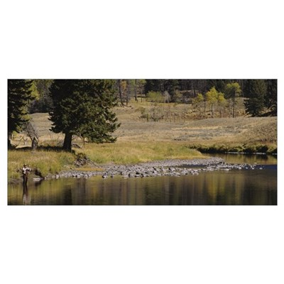Fisherman fly fishing in a stream, Yellowstone Nat Poster