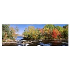 Trees near a river, Bog River, New York State Poster