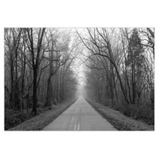 Foggy Tree Lined Road IL