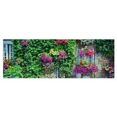 Europe, France, Pontorson, Wall covered with flowe Poster