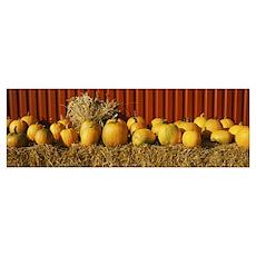 Pumpkins near a fence, Oland, Sweden Poster