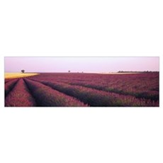 Lavender Field France Canvas Art