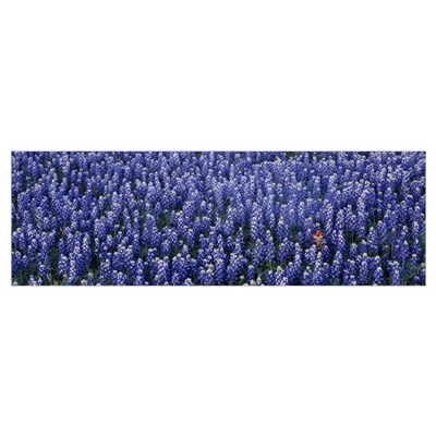 Blue Bonnets Texas Hill Country TX Canvas Art