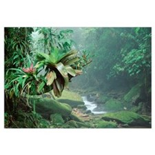Bromeliads growing along stream in Bocaina Nationa