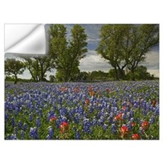 Sand Bluebonnets and Indian Paintbrush in bloom Hi Wall Decal