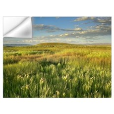 Grasslands, Arapaho National Wildlife Refuge, Colo Wall Decal
