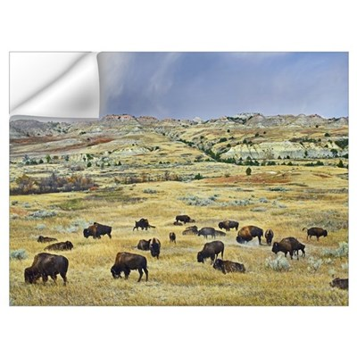 American Bison herd grazing on shortgrass praire n Wall Decal
