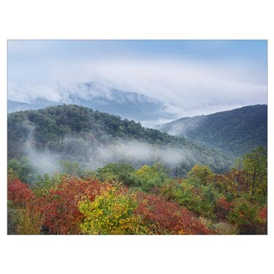 Broadleaf forest in fall colors as seen from Buck Framed Print