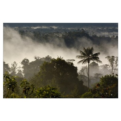 Cloud forest vegetation in mist, western slope of Poster
