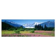 Fireweed Mendenhall Glacier Juneau AK Poster