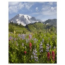 Paradise Meadow and Mount Rainier, Mount Rainier N Poster