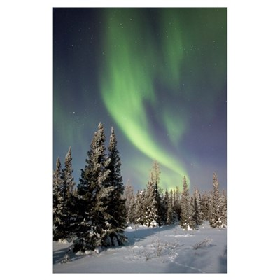 Northern lights over boreal forest, North America Poster