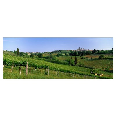 Vineyards and Medieval Town of San Gimignano Tusca Poster