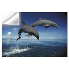Bottlenose Dolphin (Tursiops truncatus) pair, Cari Wall Decal