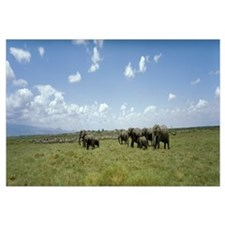 Elephants Amboseli National Park Kenya Africa