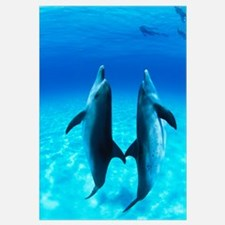 Atlantic Spotted Dolphin (Stenella frontalis) pair