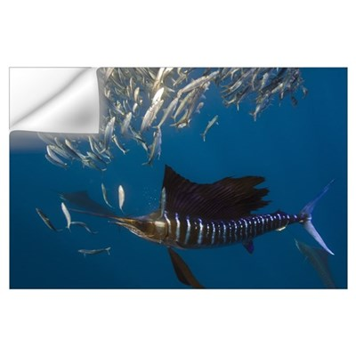 Atlantic Sailfish Feeding Wall Decal