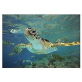 Green turtle Wrapped Canvas Art