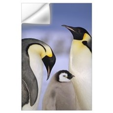 Emperor Penguin pair with chick, Atka Bay, Weddell Wall Decal
