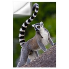 Ring-tailed Lemur on rocks in the Andringitra Moun Wall Decal