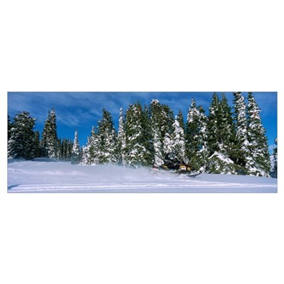 Snowmobiling in Yellowstone National Forest CA Poster