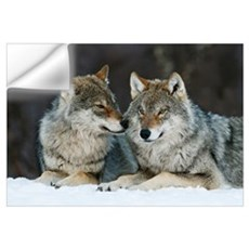 Gray Wolf (Canis lupus) pair in the snow, Norway. Wall Decal