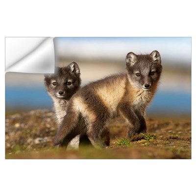 Two Arctic Fox (Alopex lagopus) kits in the tundra Wall Decal