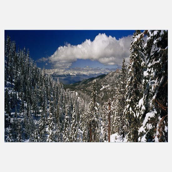 Snow covered pine trees in a forest with a lake in